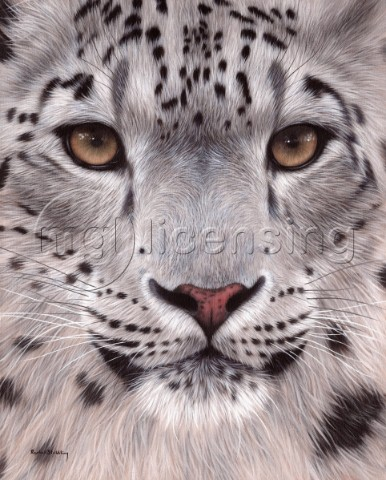 Detailed painting of a snow leopards face