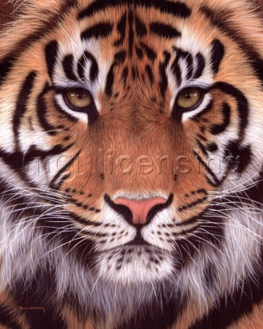 Oil painting of a sumatran tiger face looking directly at the viewer