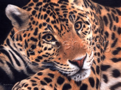 Detailed oil painting of a jaguar close up laying and intensely staring ahead