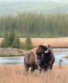 Oil painting of an American Bison standing infront of a lake, with a forest background.