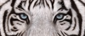 White Tiger Eyes