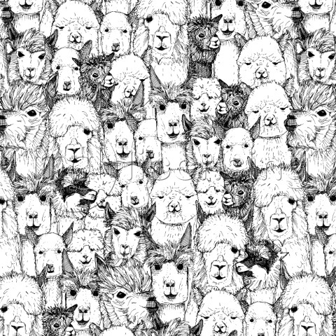 just alpacas Variant 1