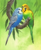 Budgies on Green Background