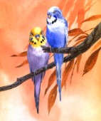 Budgies on Peach background