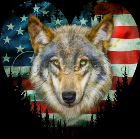 USA Wolf variant 1