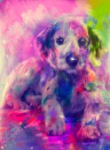 Puppy Surrounded By Colours